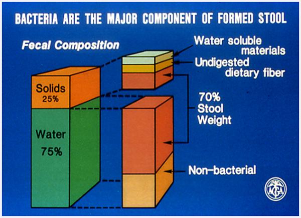 mangime dietetico per batteri helicobacter pylori